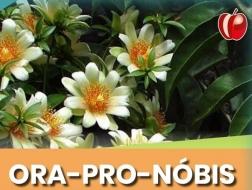 Ora-pro-nóbis - E-book para você e seu paciente!