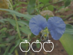 Plantas Alimentares Não Convencionais  Valéria Paschoal